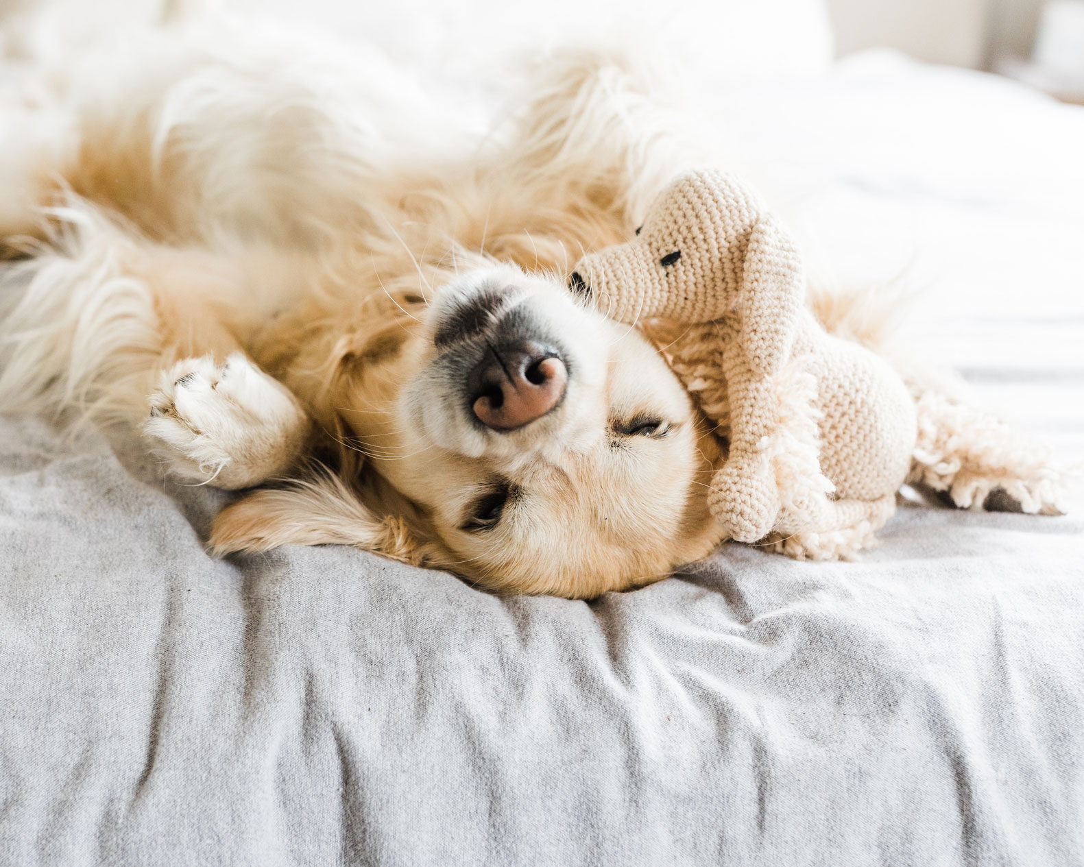 The Fenley Pet-Friendly Dog in Bed